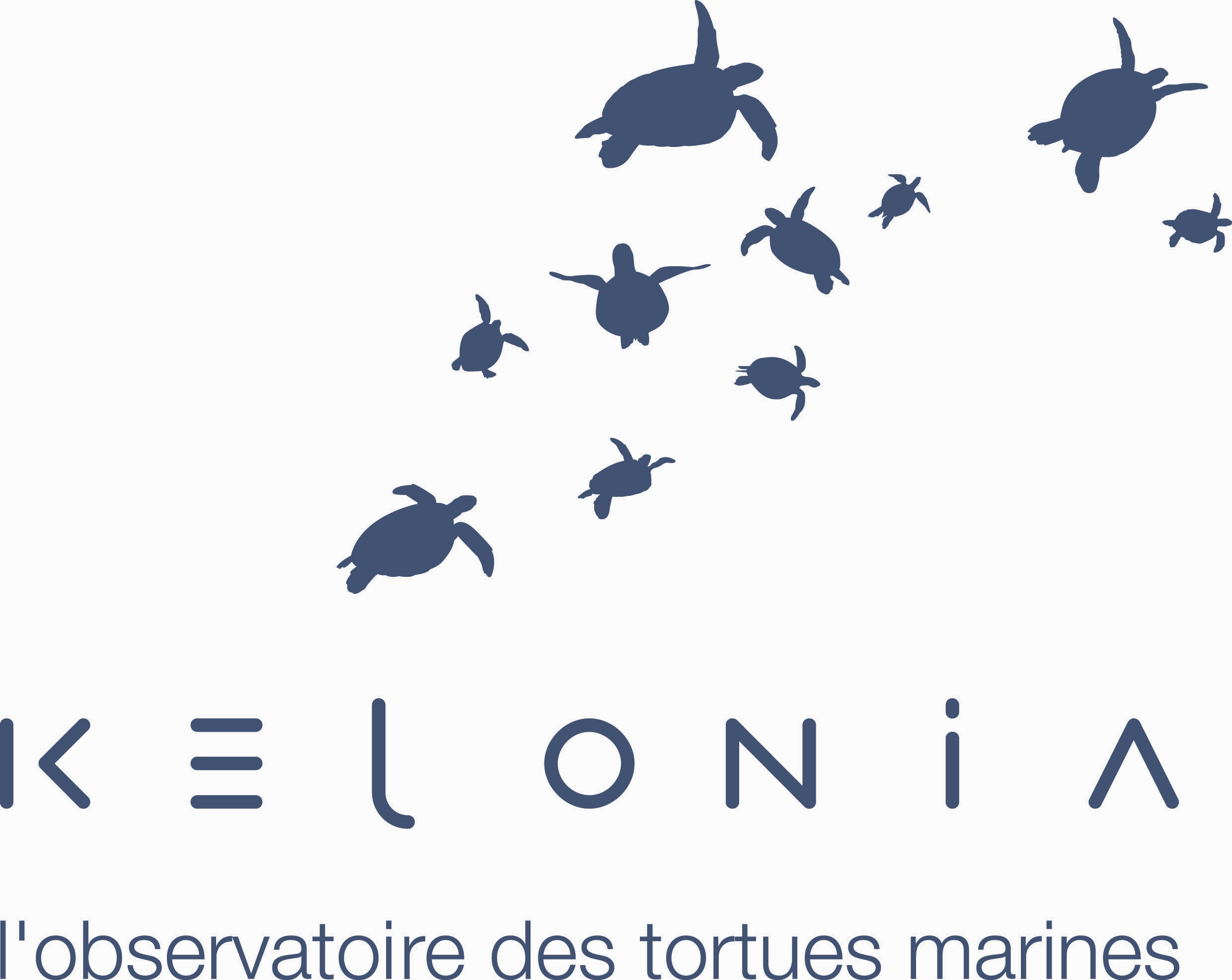 Programme de photo-identification des tortues marines à la Réunion